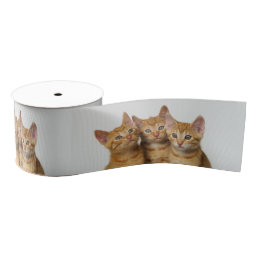 Three Cute Ginger Cat Kittens Together - Pet Photo Grosgrain Ribbon