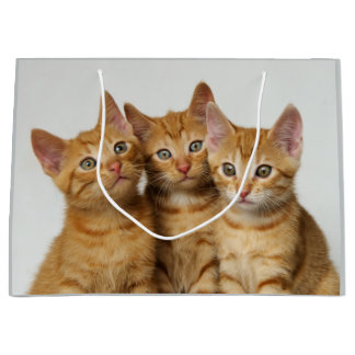 Three cute ginger kittens side by side large gift bag