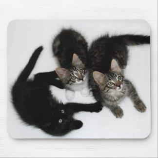 Three Cute Kittens Mousepad