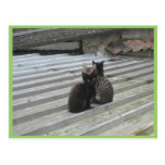 Three Cute Kittens On Stairs Post Cards