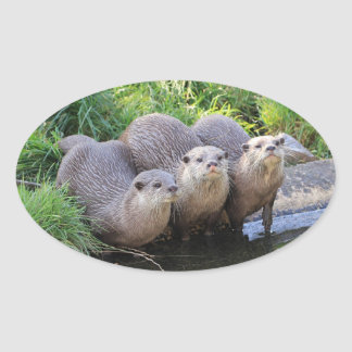 Three Cute Otters Wildlife Photography Oval Sticker