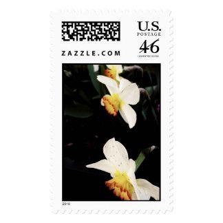 Three Daffodils - Postage