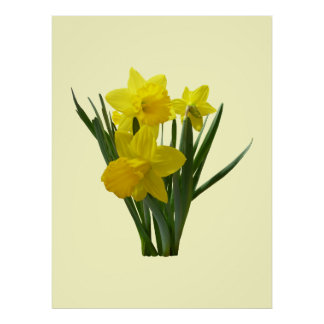 Three Daffodils Standing Guard Poster