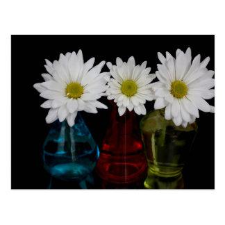 Three Daisies In Cute Jars Postcard