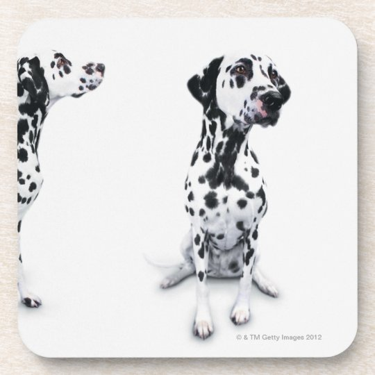 Three Dalmatians Beverage Coaster