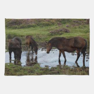 Three Dartmoor Ponies Drinking At Watering Hole Towels