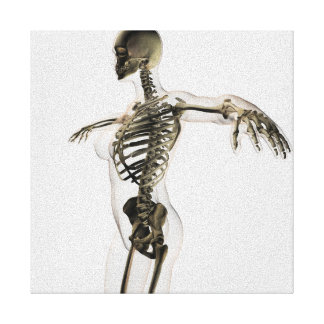 Three Dimensional View Of Female Skeletal System Canvas Print