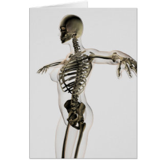 Three Dimensional View Of Female Skeletal System Card