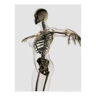 Three Dimensional View Of Female Skeletal System Postcard