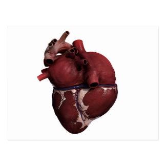 Three Dimensional View Of Human Heart, Back Postcard