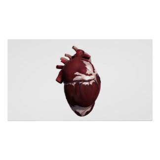 Three Dimensional View Of Human Heart, Left Side Poster