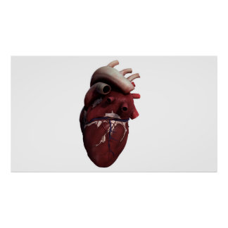 Three Dimensional View Of Human Heart, Right Poster