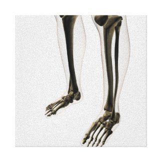 Three Dimensional View Of Human Leg And Feet Canvas Print