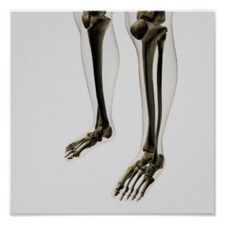 Three Dimensional View Of Human Leg And Feet Poster
