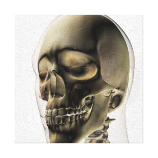 Three Dimensional View Of Human Skull And Teeth Canvas Print