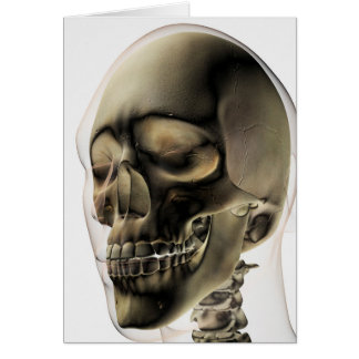 Three Dimensional View Of Human Skull And Teeth Card
