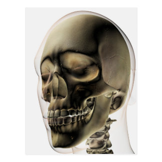 Three Dimensional View Of Human Skull And Teeth Postcard