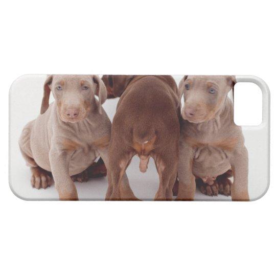 Three Doberman pinscher puppies iPhone SE/5/5s Case