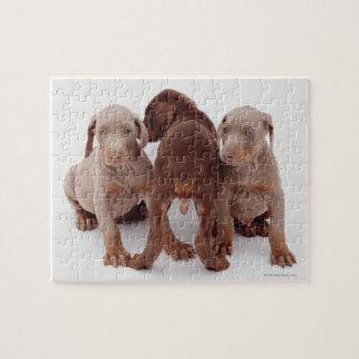 Three Doberman pinscher puppies Jigsaw Puzzle