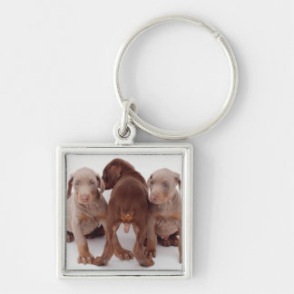 Three Doberman pinscher puppies Keychains