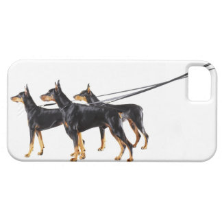 Three Dobermans on leash iPhone 5 Cover