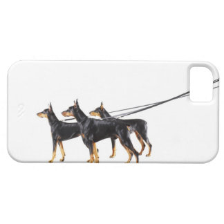 Three Dobermans on leash iPhone 5 Cover