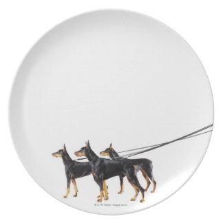 Three Dobermans on leash Dinner Plate