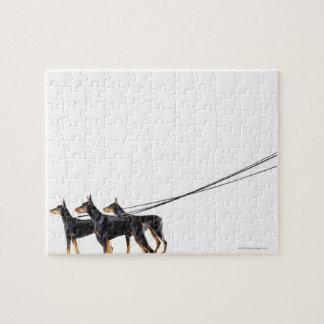 Three Dobermans on leash Jigsaw Puzzle