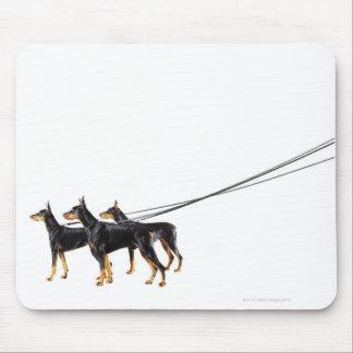 Three Dobermans on leash Mouse Pad
