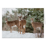 Three does in winter greeting card