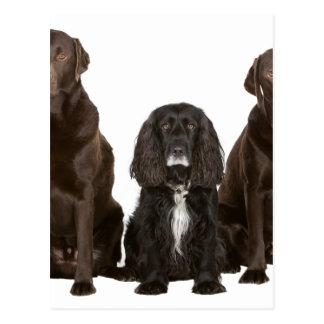 Three Doggy Friends Postcard