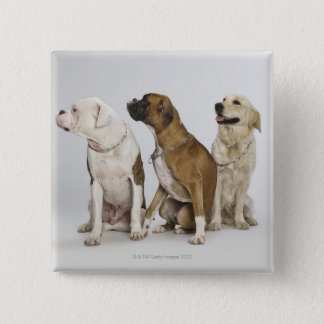 three dogs all looking to the right pinback button