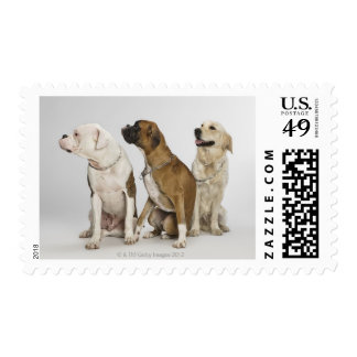 three dogs all looking to the right postage