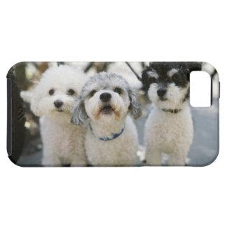 Three dogs iPhone SE/5/5s case