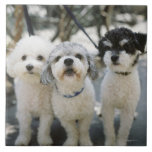 Three dogs large square tile