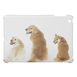 Three dogs looking at camera cover for the iPad mini
