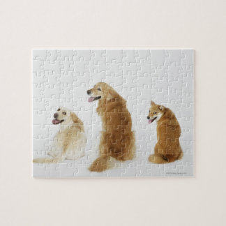 Three dogs looking at camera jigsaw puzzle