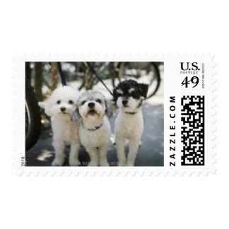 Three dogs postage