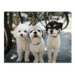 Three dogs postcard