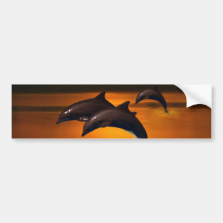 Three dolphins at sunset bumper sticker