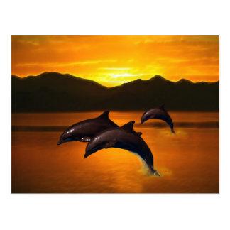 Three dolphins at sunset postcard