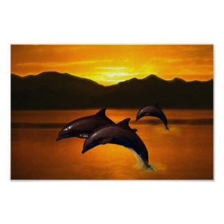 Three dolphins at sunset poster