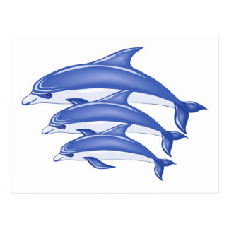 Three Dolphins Post Card