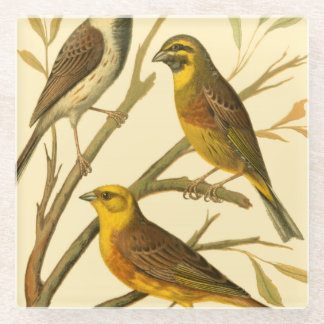 Three Domestic Birds Perched on a Branch Glass Coaster