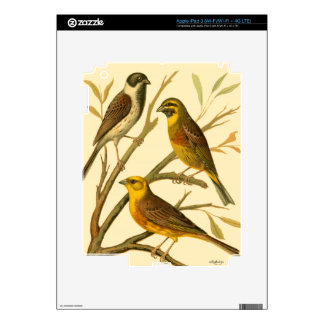 Three Domestic Birds Perched on a Branch iPad 3 Skins