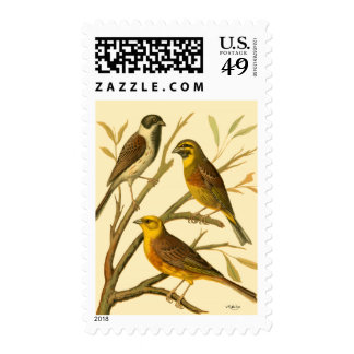 Three Domestic Birds Perched on a Branch Postage