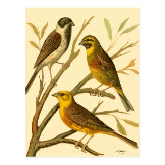 Three Domestic Birds Perched on a Branch Postcard