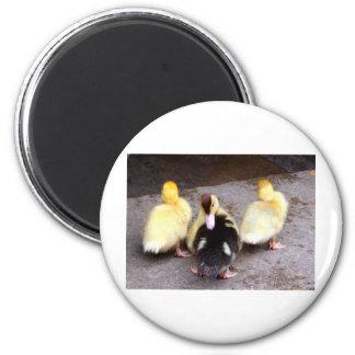 Three ducklings magnet