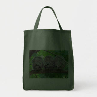 Three Eastern Screech-Owl Babies in a Tree Canvas Bag