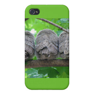 Three Eastern Screech-Owl Babies in a Tree Cases For iPhone 4